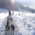 Chiens de traineaux pour votre multi activités en hiver