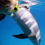Séminaire aventure marine sur la Côte d'Azur
