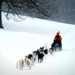 Séminaire de chiens de traineaux à la Montagne
