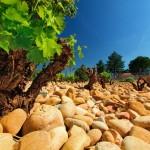 Séminaire à Avignon en Provence, histoire, vigne et authenticité!