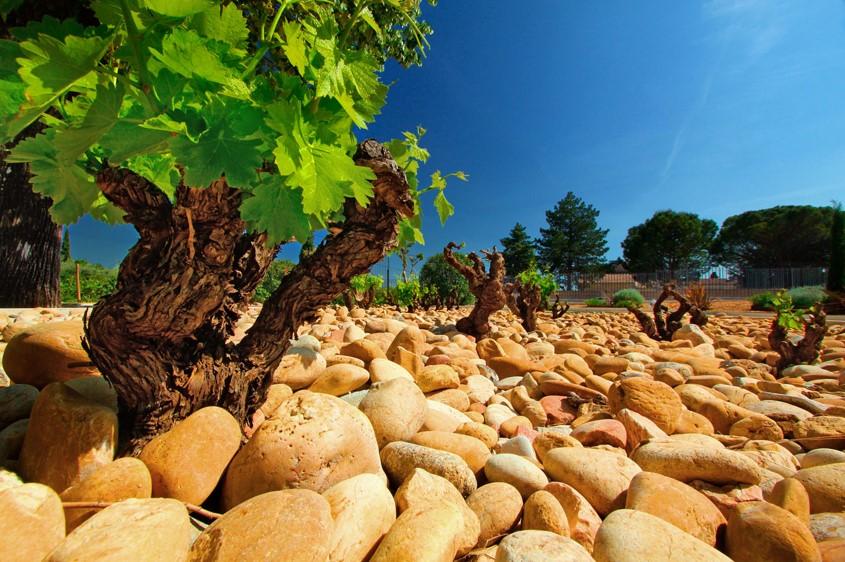 Dégustation de vin en Provence pour votre séminaire