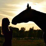 séminaire cheval en Provence